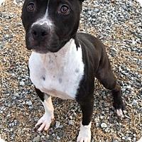 Adopt A Pet :: Cathy - Greensboro, NC