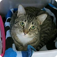 Adopt A Pet :: Maleficent - Northbrook, IL