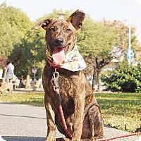 Adopt A Pet :: Quie - Castro Valley, CA