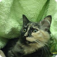 Adopt A Pet :: Tundra - Richmond, VA