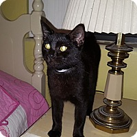 Adopt A Pet :: Beezus - Tampa, FL