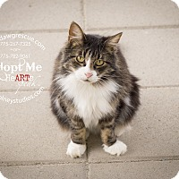 Adopt A Pet :: Thistle - Gardnerville, NV