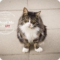Adopt A Pet :: Thistle - Gardnerville, NV