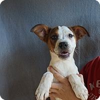 Adopt A Pet :: Yin - Oviedo, FL