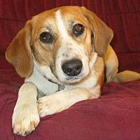 Adopt A Pet :: Jeannie - Melbourne, AR