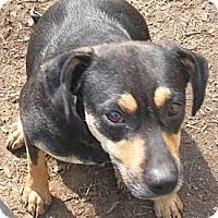 Adopt A Pet :: Brandy - Pembroke, GA