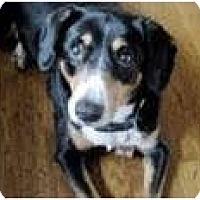 Adopt A Pet :: Jezebel - Spring City, TN