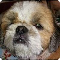 Adopt A Pet :: Sam-PA - Emmaus, PA