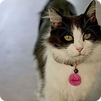 Adopt A Pet :: Aubrey - Grand Rapids, MI