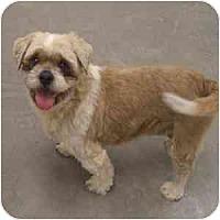 Adopt A Pet :: Fozzy - Phoenix, AZ