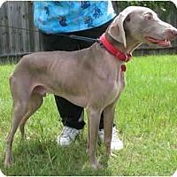 Adopt A Pet :: Rocky - Kingwood, TX
