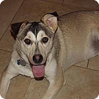 Adopt A Pet :: Mari - Phoenix, AZ