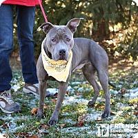 Adopt A Pet :: Dani - Springfield, IL