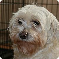 Adopt A Pet :: Angel - Prole, IA