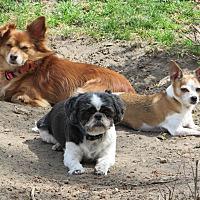 Adopt A Pet :: Dj - Columbia Heights, MN
