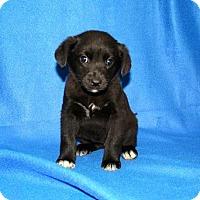 Adopt A Pet :: Dancer - Erwin, TN