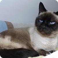 Adopt A Pet :: Sumi - Orleans, VT