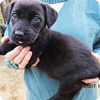 Adopt A Pet :: NORA - Williston Park, NY