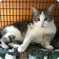 Adopt A Pet :: Zephrina aka Scooby - Tucson, AZ