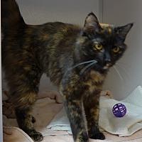 Adopt A Pet :: Star - Manning, SC