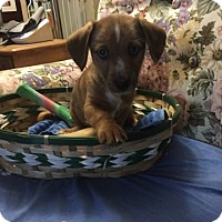 Adopt A Pet :: Tyreek pending adoption - Manchester, CT