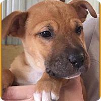 Adopt A Pet :: Boss - DeForest, WI