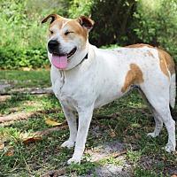 Adopt A Pet :: Precious - Boca Raton, FL