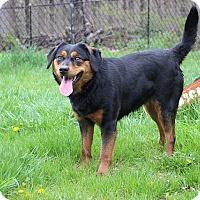 Adopt A Pet :: Sheba - Sparta, NJ