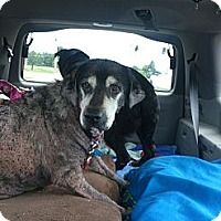 Adopt A Pet :: Daisy Deuce - Georgetown, KY