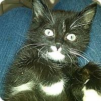 Adopt A Pet :: Eden - Sterling Hgts, MI