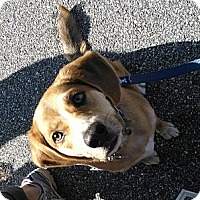 Adopt A Pet :: Frankie - Cumming, GA