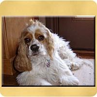 Adopt A Pet :: Emma - Scottsdale, AZ