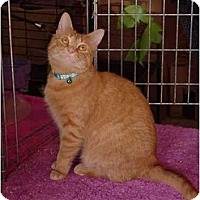 Adopt A Pet :: Lotto - Chesapeake, VA