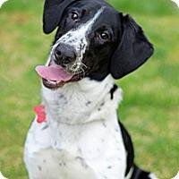 Adopt A Pet :: Buddy B - Tinton Falls, NJ