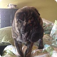 Adopt A Pet :: Ada - Albuquerque, NM