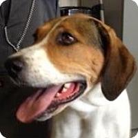 Adopt A Pet :: CiCi - Canoga Park, CA