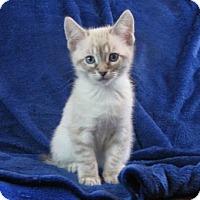 Adopt A Pet :: Beethover - Davis, CA