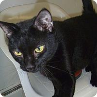 Adopt A Pet :: Joey - Hamburg, NY