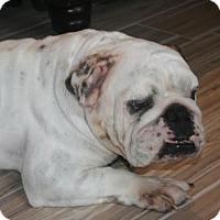 Adopt A Pet :: Norman - Odessa, FL