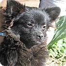 Adopt A Pet :: Emerald