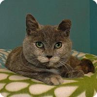 Adopt A Pet :: Marble - Cincinnati, OH