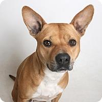 Adopt A Pet :: Sheila - Redding, CA