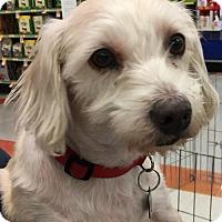 Adopt A Pet :: MIA - Lakewood, CA
