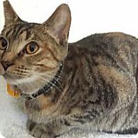 Adopt A Pet :: Kiwi - Orillia, ON