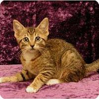 Adopt A Pet :: Carmello - Sacramento, CA