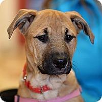 Adopt A Pet :: Mindy - Surrey, BC