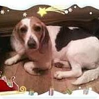 Adopt A Pet :: Valentine - Staunton, VA