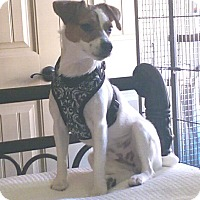 Adopt A Pet :: Molly in Beaumont - Houston, TX