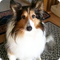 Adopt A Pet :: Star - Abingdon, MD