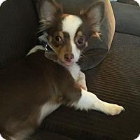 Adopt A Pet :: Oni - Scottsdale, AZ